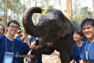 Elephant-Assisted Therapy | Chiang Mai, Thailand (Shot on Nikon D3100)