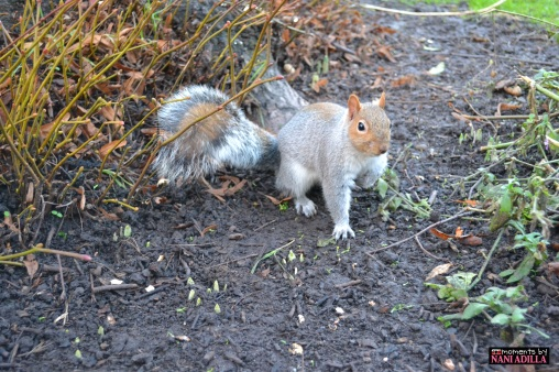 Squirrel in the park | Coventry, United Kingdom (Shot on Nikon D3100)