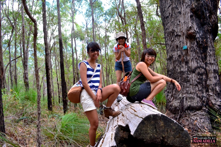 Trekking the Jarrahdale trail