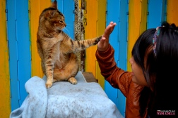 A meowish high-five | Tai-O, Hong Kong