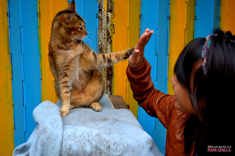 Receiving a meowish high-five!
