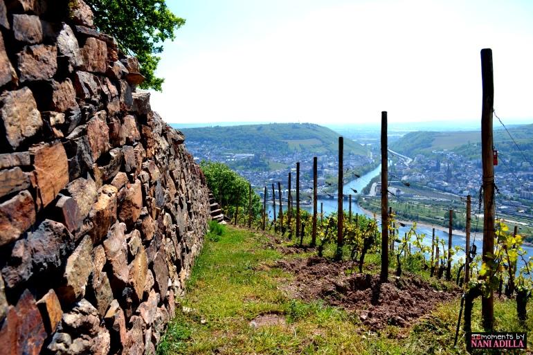 The vineyards of Rüdesheim