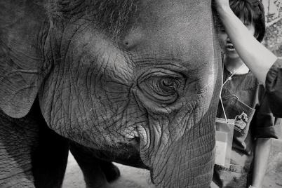 B&W Challenge Day 1/5 | Those elephant eyes (Shot on Nikon D3100)