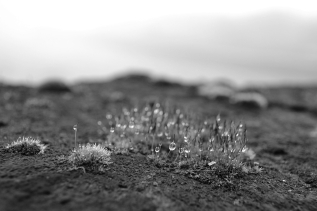 B&W Challenge Day 2/5 | Early morning dewdrops (Shot on Nikon D3100)