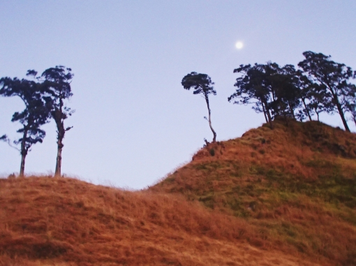 Lone trees | Mt Rinjani, Lombok, Indonesia (Shot on Olympus TG-630)