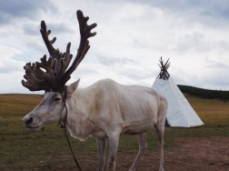 Reindeer family | Khusvgul, Mongolia (Shot on Fujifilm x100t)
